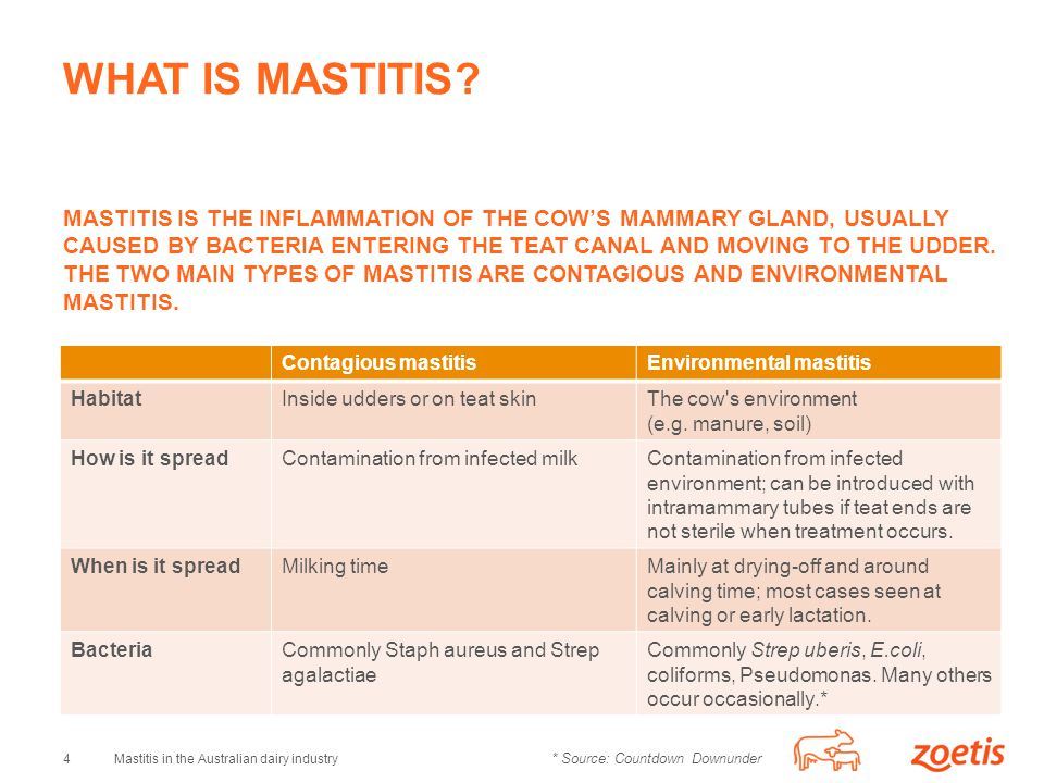 4Mastitis in the Australian dairy industry WHAT IS MASTITIS.