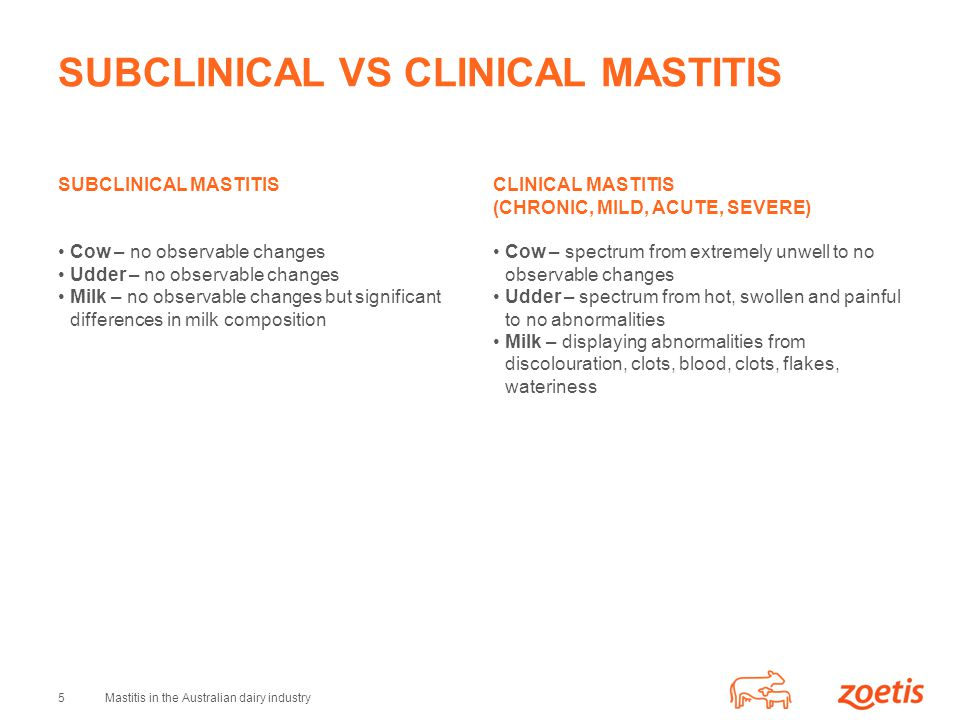 5Mastitis in the Australian dairy industry SUBCLINICAL VS CLINICAL MASTITIS SUBCLINICAL MASTITIS Cow – no observable changes Udder – no observable changes Milk – no observable changes but significant differences in milk composition CLINICAL MASTITIS (CHRONIC, MILD, ACUTE, SEVERE) Cow – spectrum from extremely unwell to no observable changes Udder – spectrum from hot, swollen and painful to no abnormalities Milk – displaying abnormalities from discolouration, clots, blood, clots, flakes, wateriness