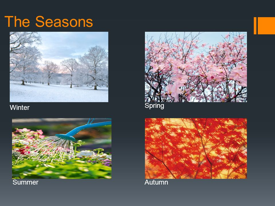 The Seasons Winter Spring SummerAutumn