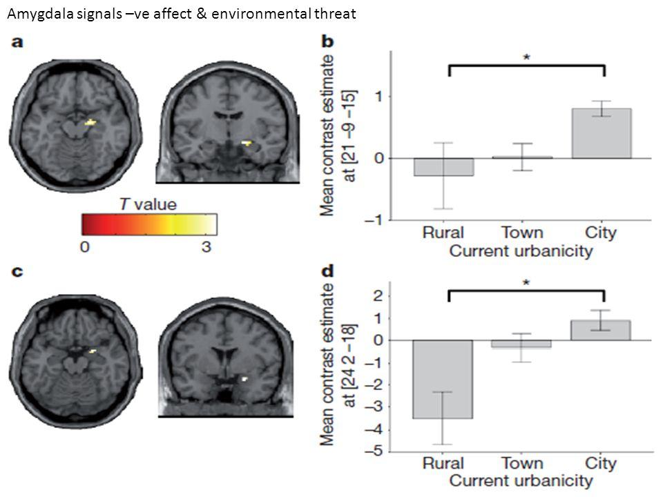 Amygdala signals –ve affect & environmental threat