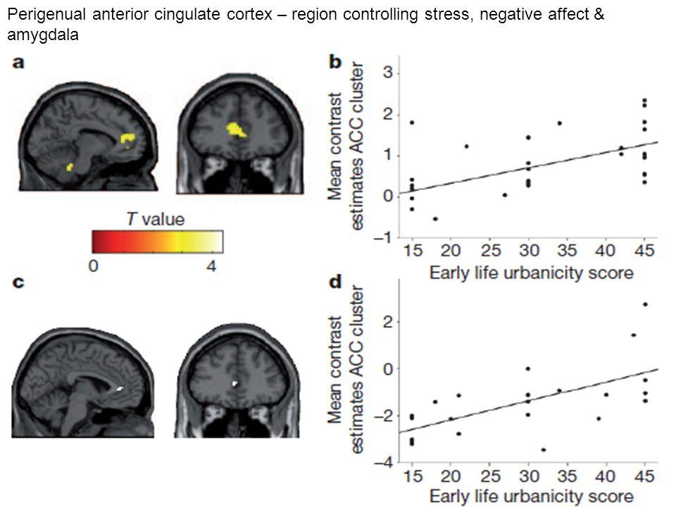Perigenual anterior cingulate cortex – region controlling stress, negative affect & amygdala