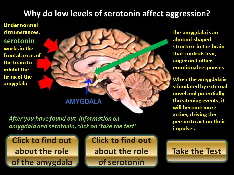 Normal levels of serotonin will have a calm, inhibitory effect on an individual But if serotonin levels are low this inhibitory effect is gone. Theref