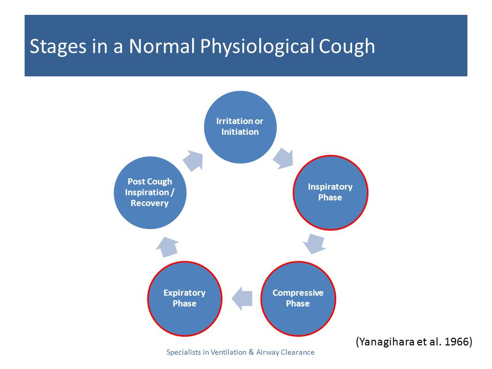 Stages in a Normal Physiological Cough Specialists in Ventilation & Airway Clearance Irritation or Initiation Inspiratory Phase Compressive Phase Expiratory Phase Post Cough Inspiration / Recovery (Yanagihara et al.