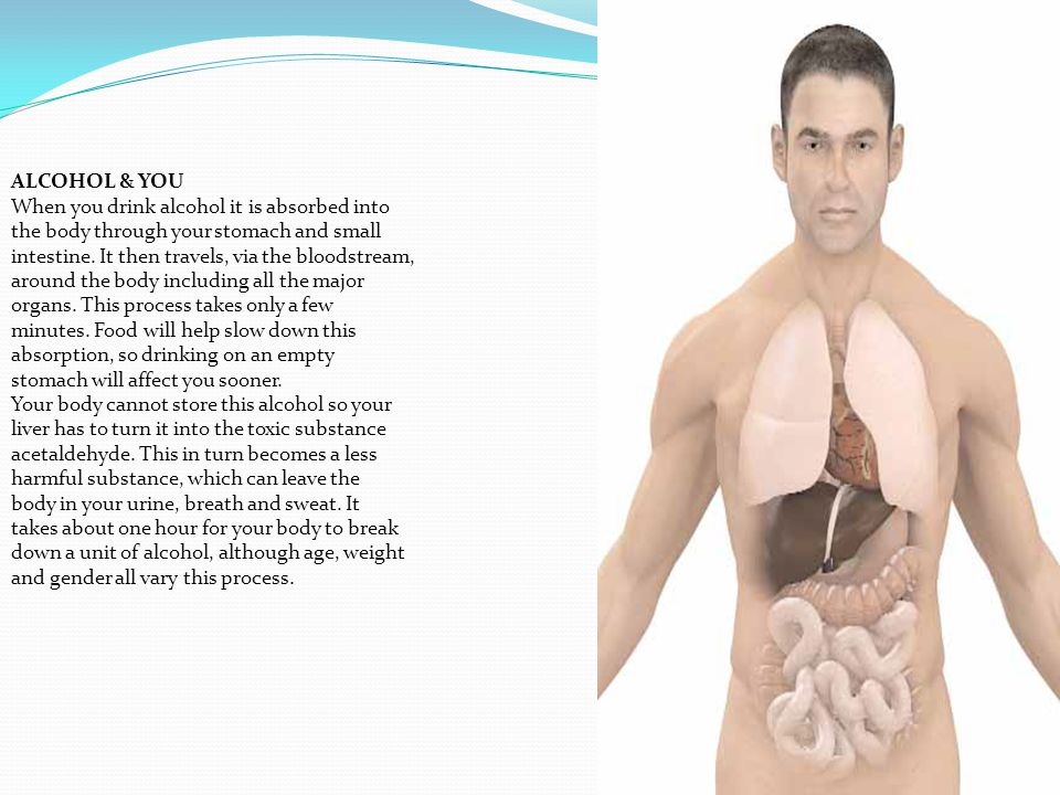 ALCOHOL & YOU When you drink alcohol it is absorbed into the body through your stomach and small intestine.