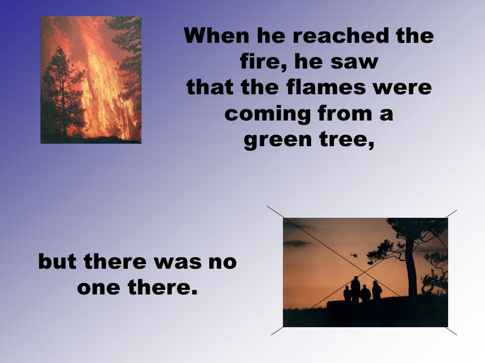 When he reached the fire, he saw that the flames were coming from a green tree, but there was no one there.