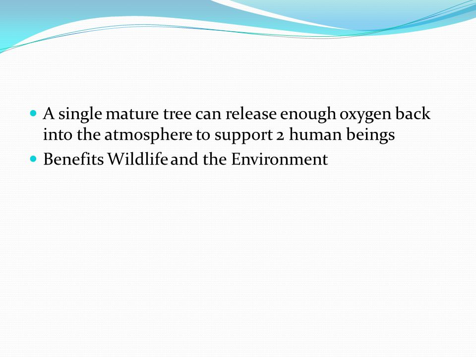 A single mature tree can release enough oxygen back into the atmosphere to support 2 human beings Benefits Wildlife and the Environment