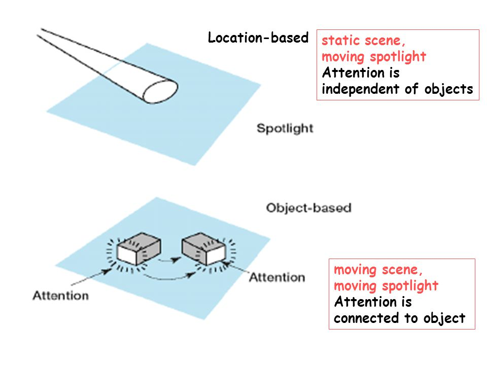 static scene, moving spotlight Attention is independent of objects moving scene, moving spotlight Attention is connected to object Location-based