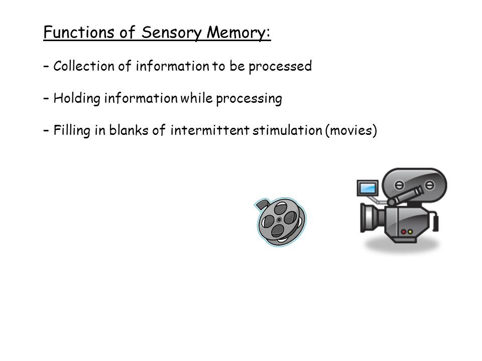 Functions of Sensory Memory: – Collection of information to be processed – Holding information while processing – Filling in blanks of intermittent stimulation (movies)
