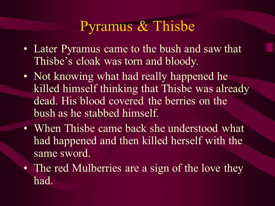 Pyramus & Thisbe Later Pyramus came to the bush and saw that Thisbe's cloak was torn and bloody.