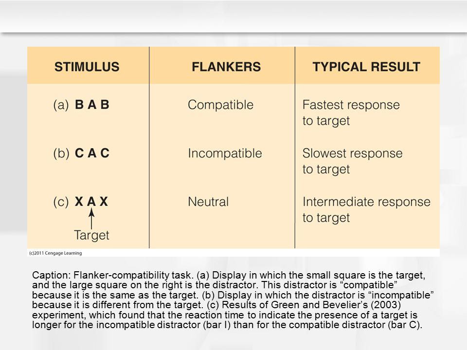 Caption: Flanker-compatibility task. (a) Display in which the small square is the target, and the large square on the right is the distractor. This di