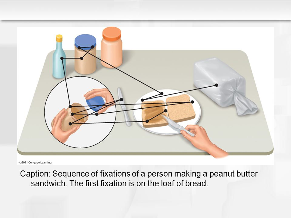 Caption: Sequence of fixations of a person making a peanut butter sandwich. The first fixation is on the loaf of bread.