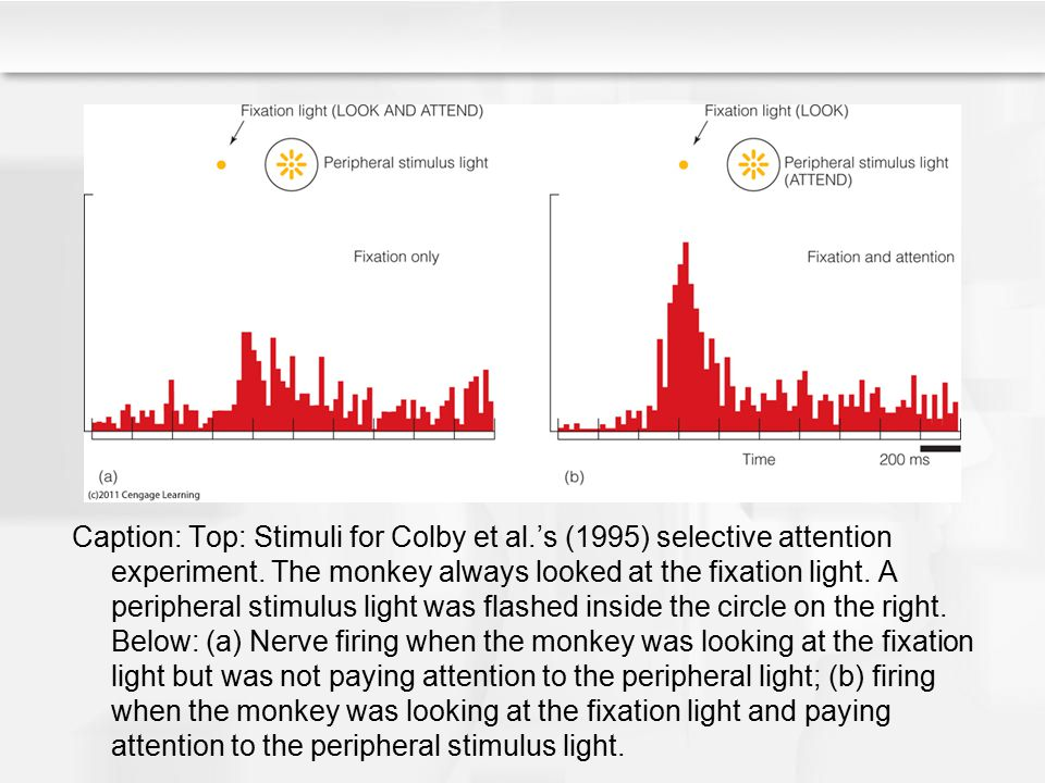 Caption: Top: Stimuli for Colby et al.'s (1995) selective attention experiment. The monkey always looked at the fixation light. A peripheral stimulus