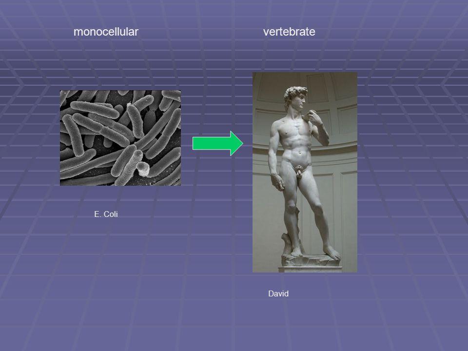 E. Coli David monocellular vertebrate