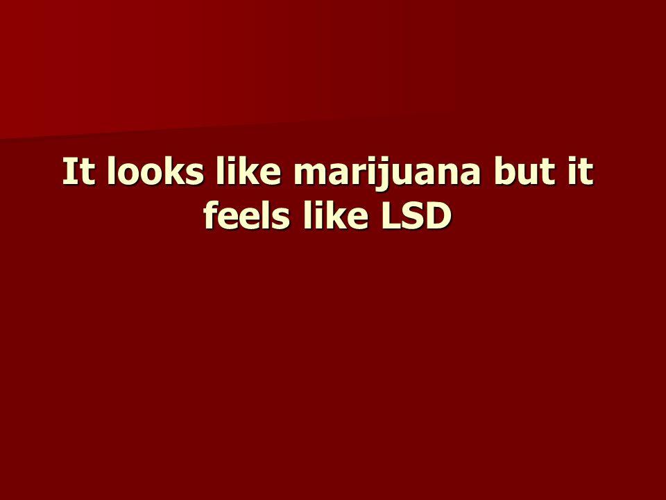 It looks like marijuana but it feels like LSD