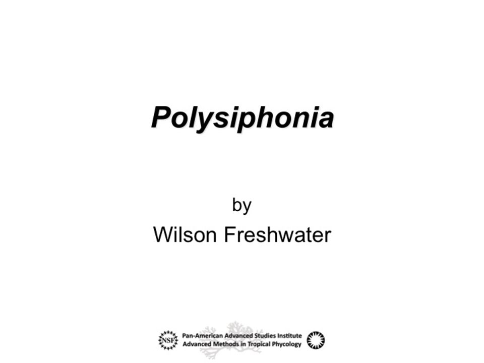 Polysiphonia sensu lato ( in the loose sense ) is the largest red algal genus with over 200 currently accepted species names (Guiry & Guiry 2009).