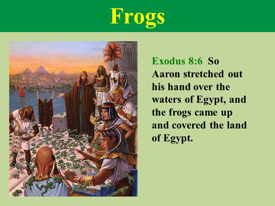 Frogs Exodus 8:6 So Aaron stretched out his hand over the waters of Egypt, and the frogs came up and covered the land of Egypt.