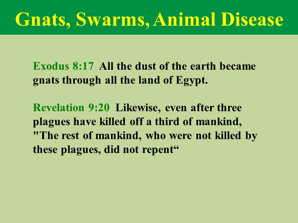 Gnats, Swarms, Animal Disease Exodus 8:17 All the dust of the earth became gnats through all the land of Egypt.