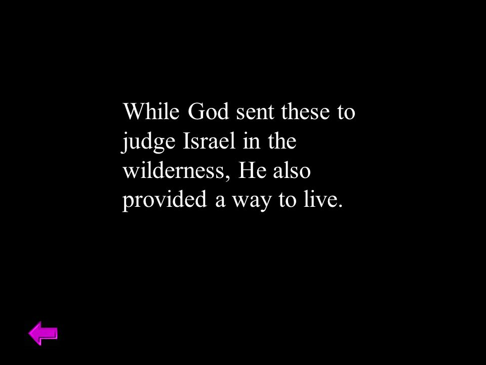 While God sent these to judge Israel in the wilderness, He also provided a way to live.