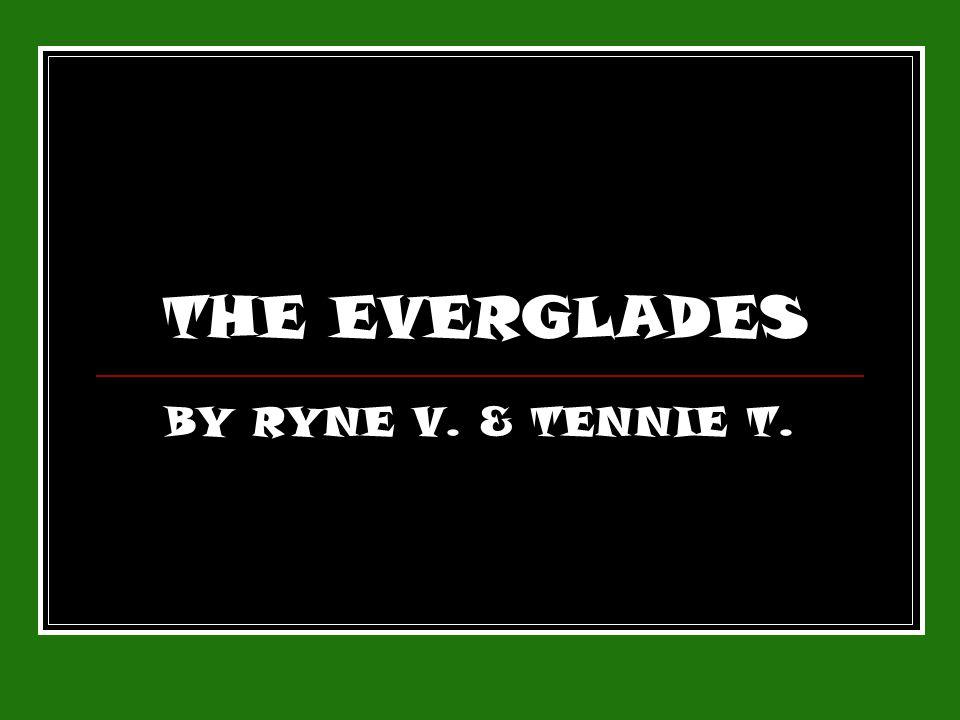 THE EVERGLADES BY RYNE V. & TENNIE T.