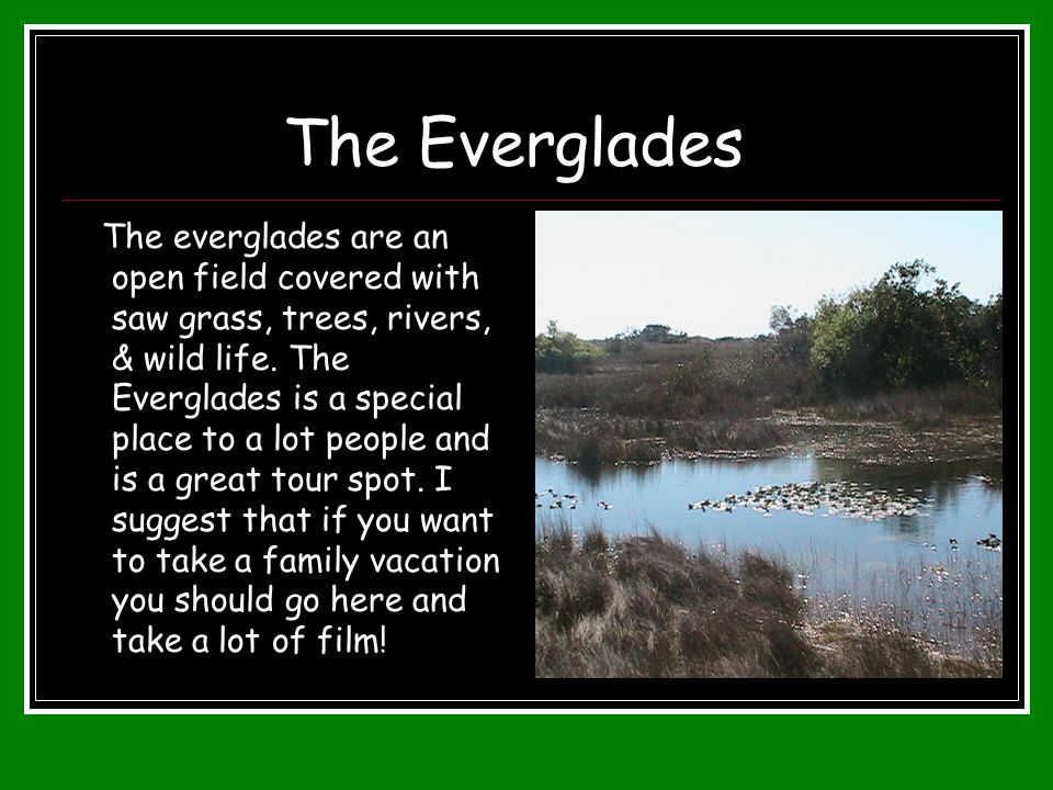 The Everglades The everglades are an open field covered with saw grass, trees, rivers, & wild life. The Everglades is a special place to a lot people