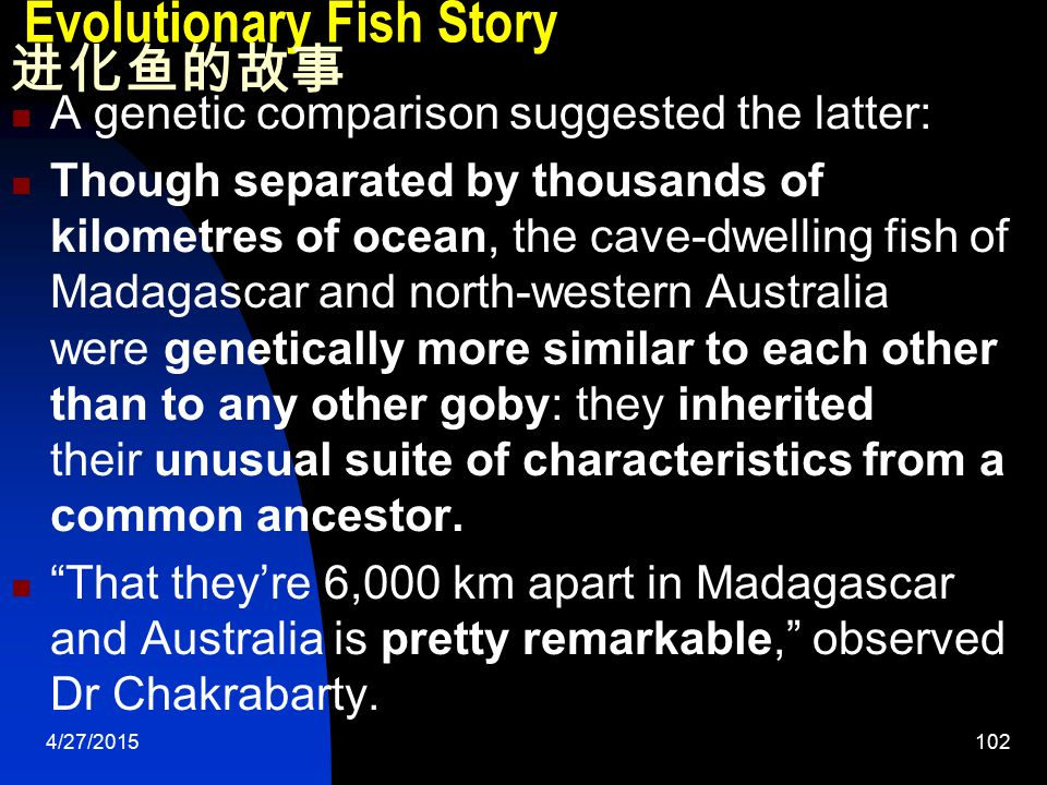 4/27/2015102 Evolutionary Fish Story 进化鱼的故事 A genetic comparison suggested the latter: Though separated by thousands of kilometres of ocean, the cave-dwelling fish of Madagascar and north-western Australia were genetically more similar to each other than to any other goby: they inherited their unusual suite of characteristics from a common ancestor.