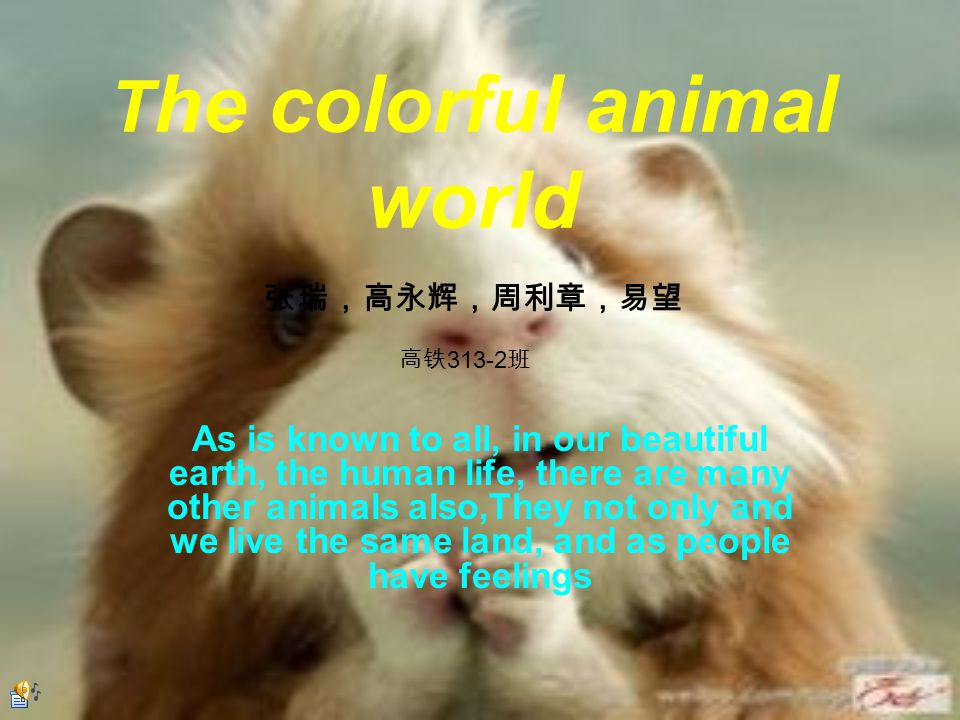 T he colorful animal world As is known to all, in our beautiful earth, the human life, there are many other animals also,They not only and we live the same land, and as people have feelings 张瑞,高永辉,周利章,易望 高铁 313-2 班