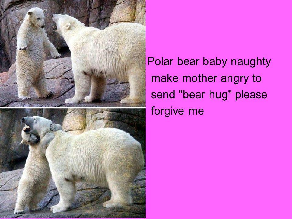 Polar bear baby naughty make mother angry to send bear hug please forgive me