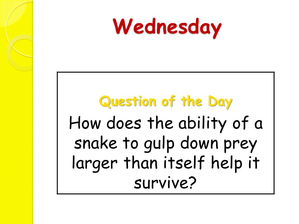 Wednesday Question of the Day How does the ability of a snake to gulp down prey larger than itself help it survive?