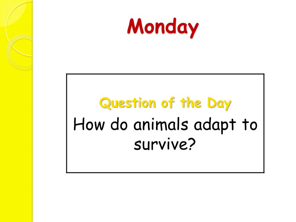 Monday Question of the Day How do animals adapt to survive?