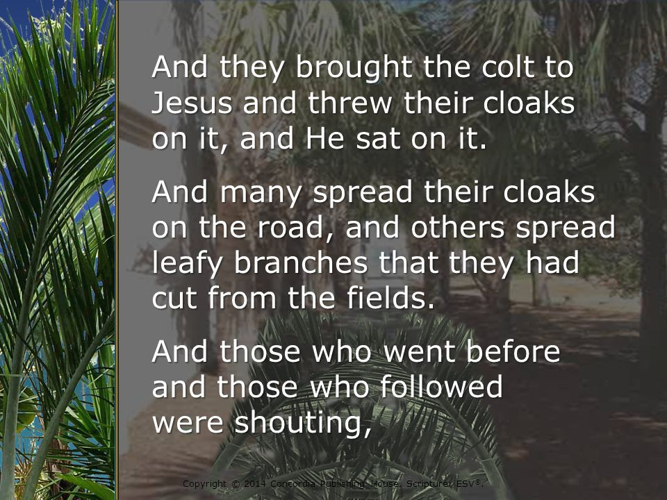 And they brought the colt to Jesus and threw their cloaks on it, and He sat on it.