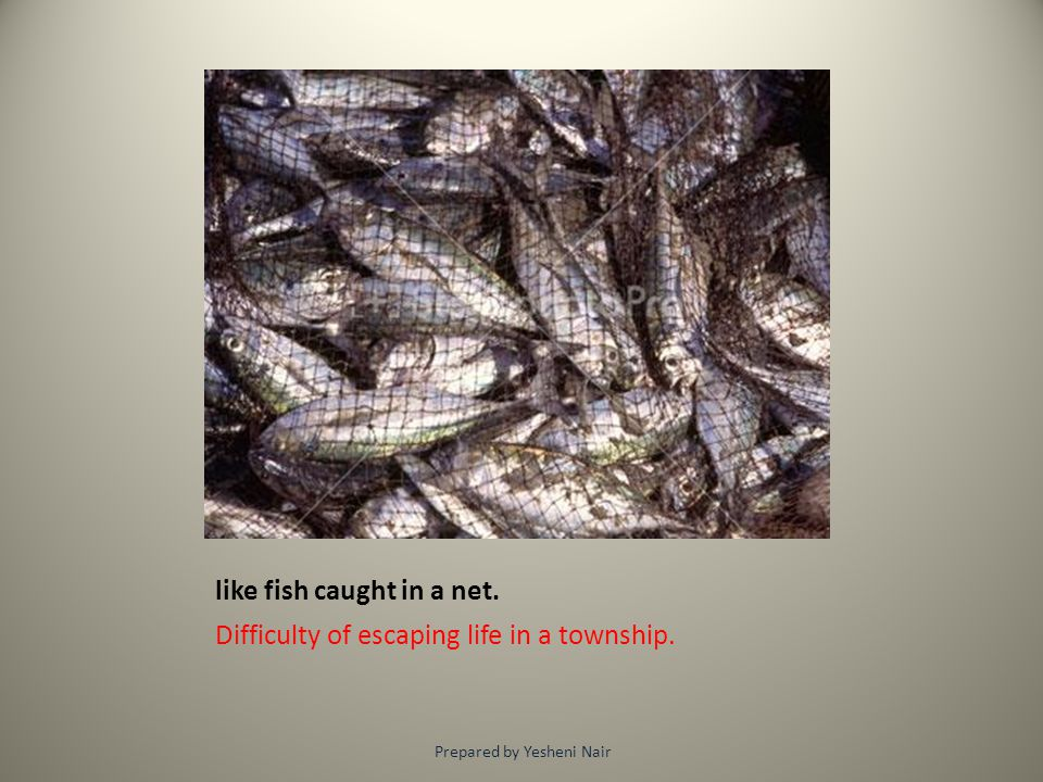 like fish caught in a net. Difficulty of escaping life in a township. Prepared by Yesheni Nair