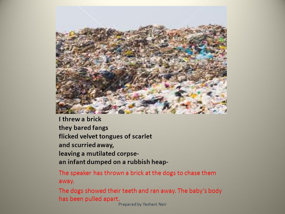 I threw a brick they bared fangs flicked velvet tongues of scarlet and scurried away, leaving a mutilated corpse- an infant dumped on a rubbish heap-