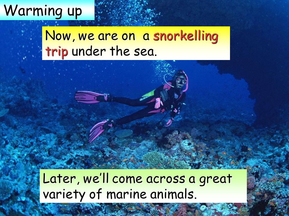 Later, we'll come across a great variety of marine animals.