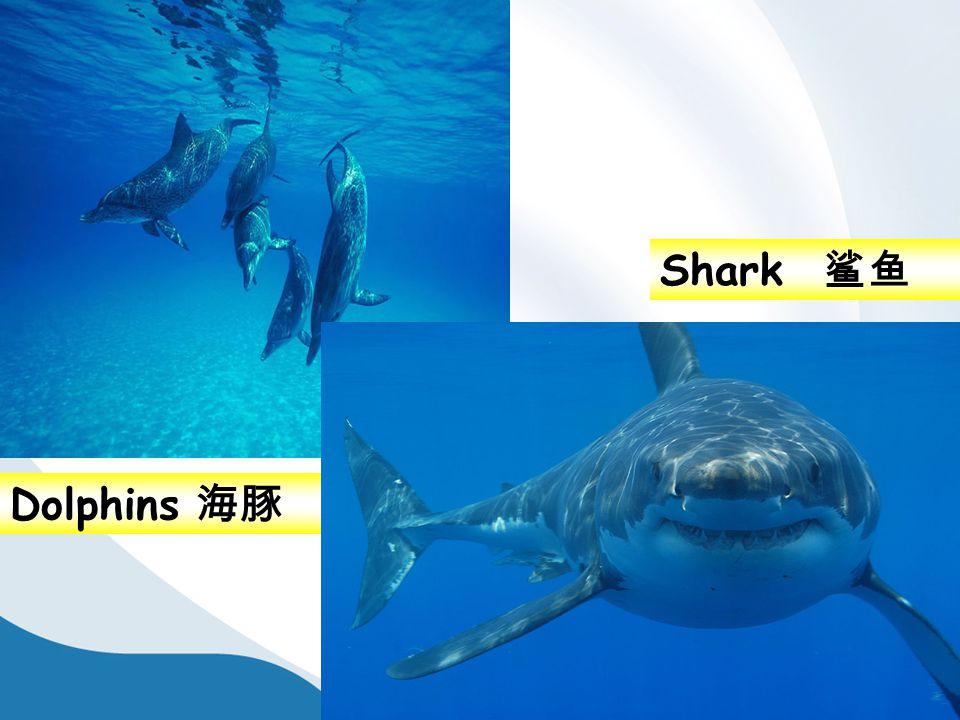 Dolphins 海豚 Shark 鲨鱼