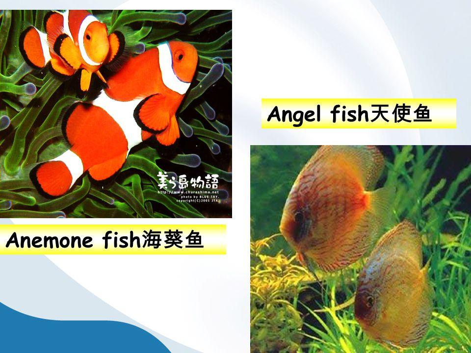 Angel fish 天使鱼 Anemone fish 海葵鱼