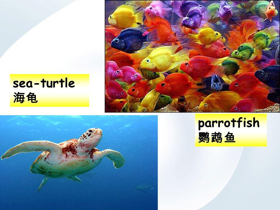 parrotfish 鹦鹉鱼 sea-turtle 海龟