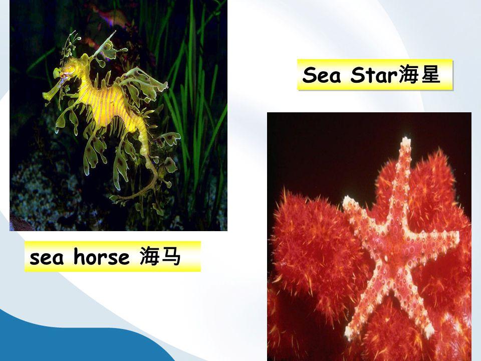 sea horse 海马 Sea Star 海星