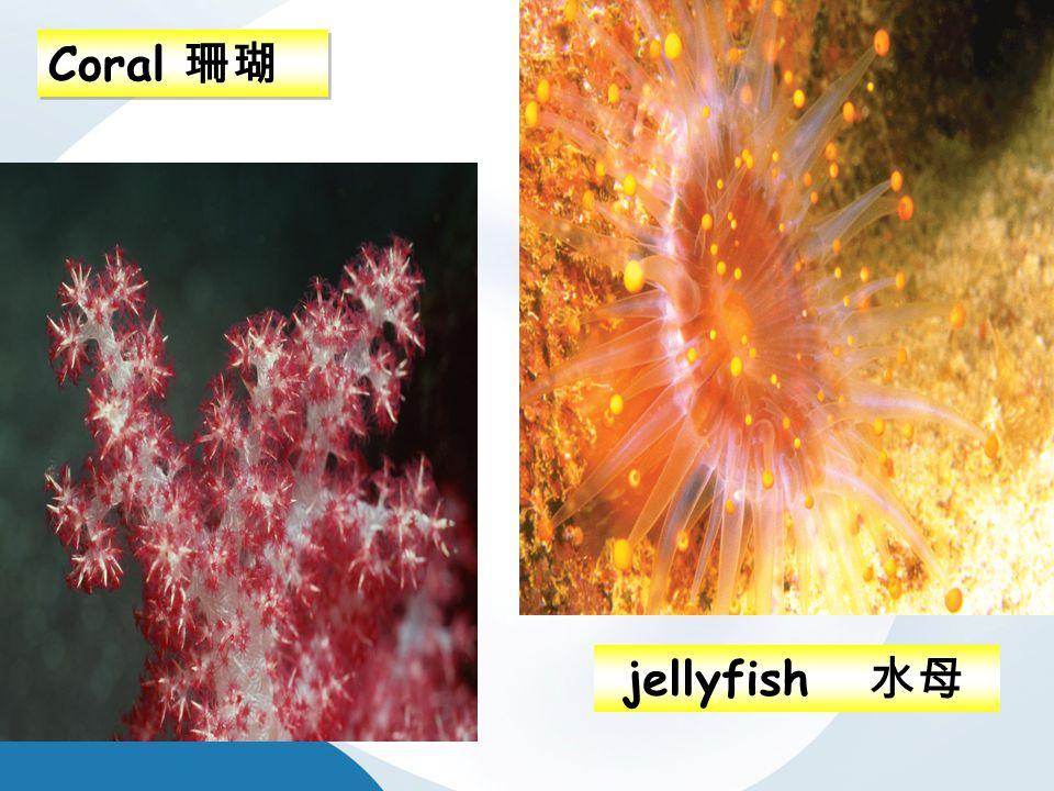 Coral 珊瑚 jellyfish 水母