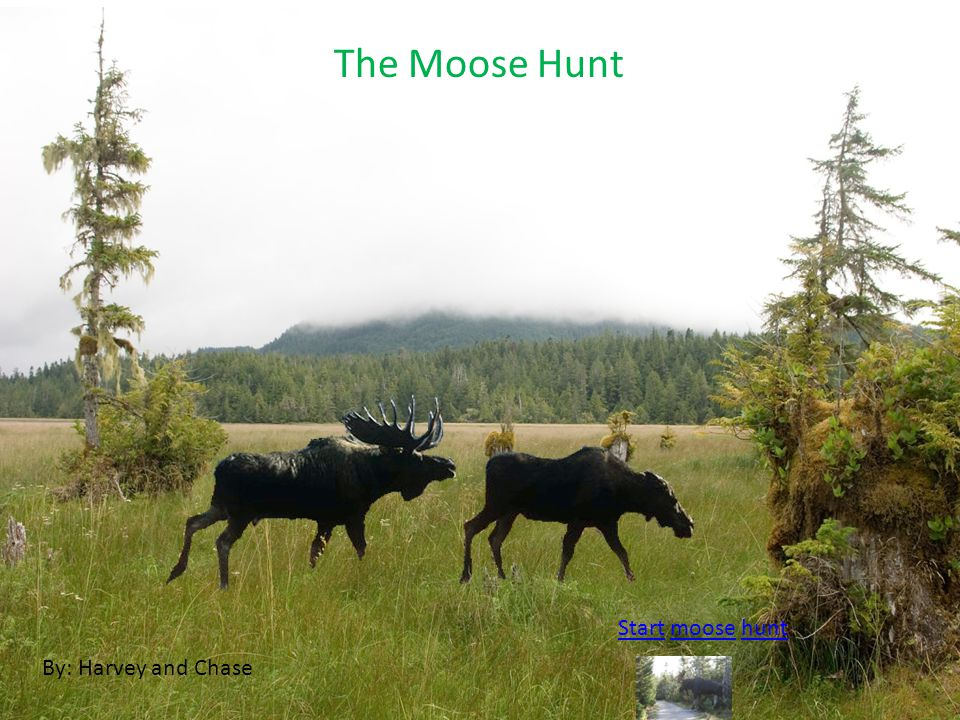 The Moose Hunt By: Harvey and Chase StartStart moose huntmoosehunt