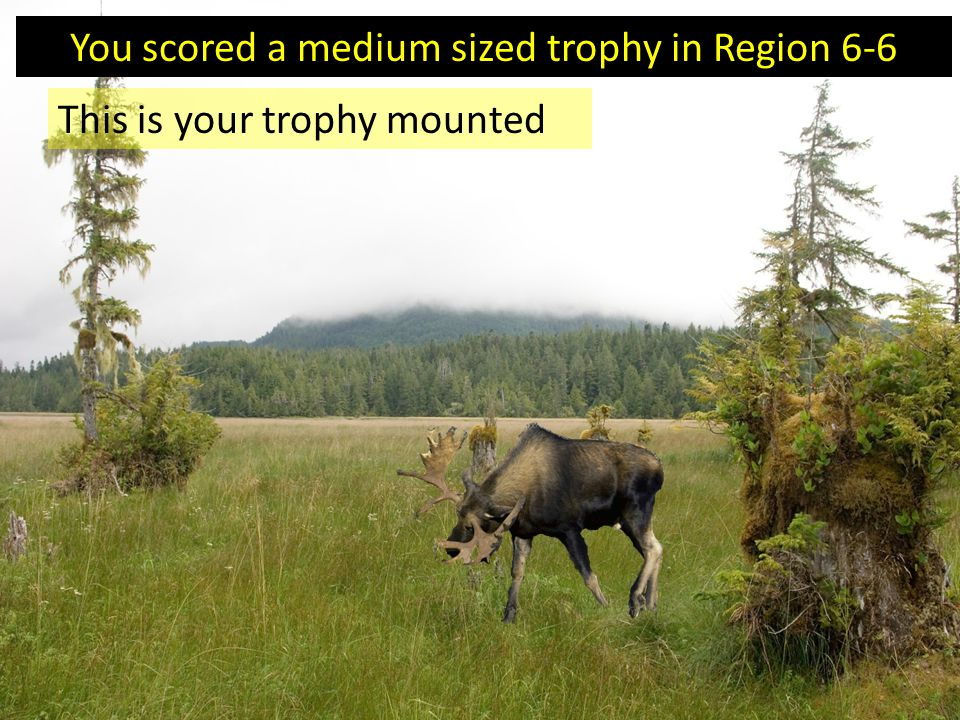 You scored a medium sized trophy in Region 6-6 This is your trophy mounted