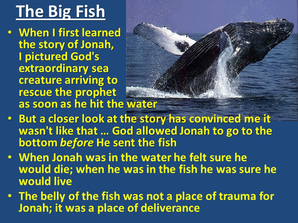 When I first learned the story of Jonah, I pictured God s extraordinary sea creature arriving to rescue the prophet as soon as he hit the water When I first learned the story of Jonah, I pictured God s extraordinary sea creature arriving to rescue the prophet as soon as he hit the water But a closer look at the story has convinced me it wasn t like that … God allowed Jonah to go to the bottom before He sent the fish But a closer look at the story has convinced me it wasn t like that … God allowed Jonah to go to the bottom before He sent the fish When Jonah was in the water he felt sure he would die; when he was in the fish he was sure he would live The belly of the fish was not a place of trauma for Jonah; it was a place of deliverance The Big Fish