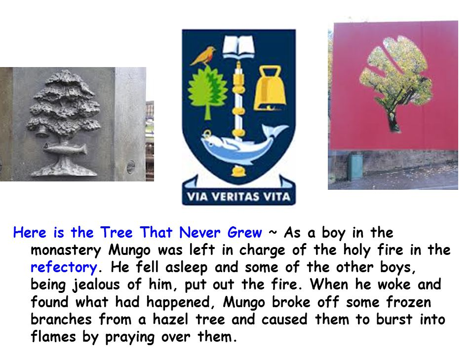 Here is the Tree That Never Grew ~ As a boy in the monastery Mungo was left in charge of the holy fire in the refectory.