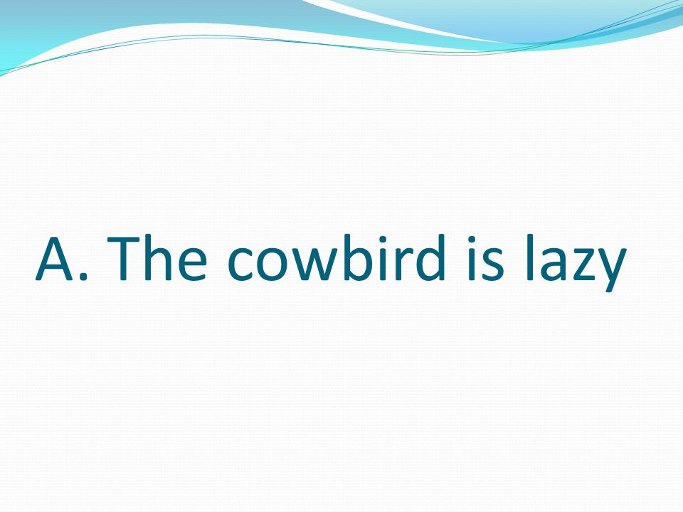 Which of these sentences is probably true. A. The cowbird is lazy B.