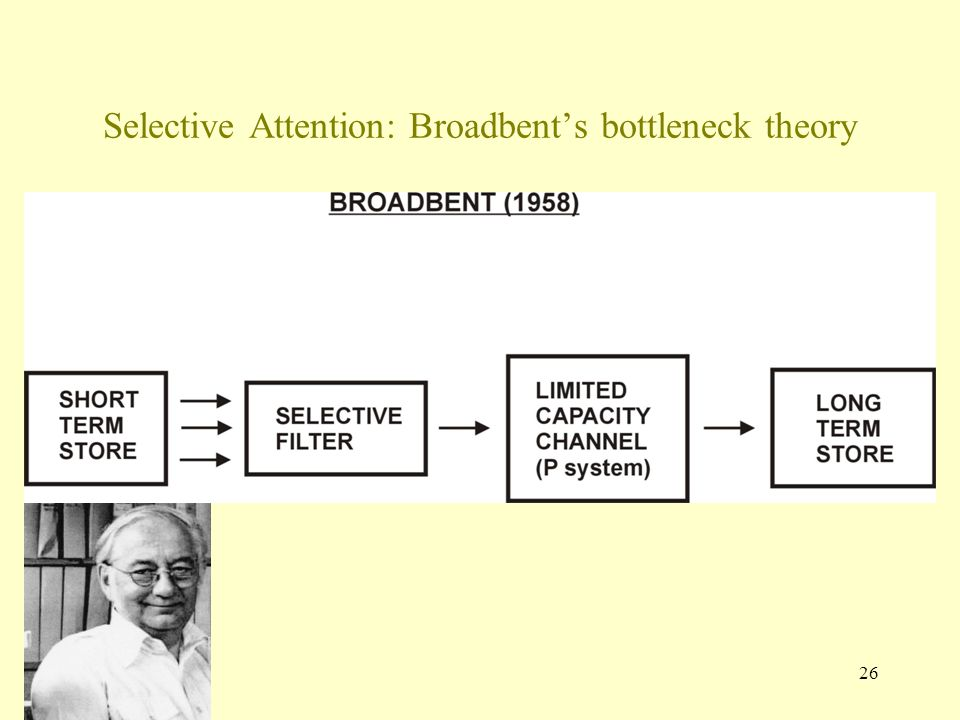 26 Selective Attention: Broadbent's bottleneck theory
