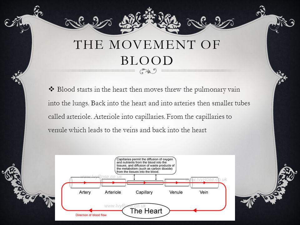 THE MOVEMENT OF BLOOD  Blood starts in the heart then moves threw the pulmonary vain into the lungs. Back into the heart and into arteries then small