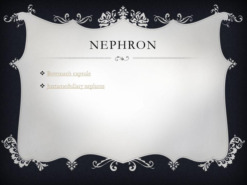 NEPHRON  Bowman's capsule Bowman's capsule  Juxtamedullary nephron Juxtamedullary nephron