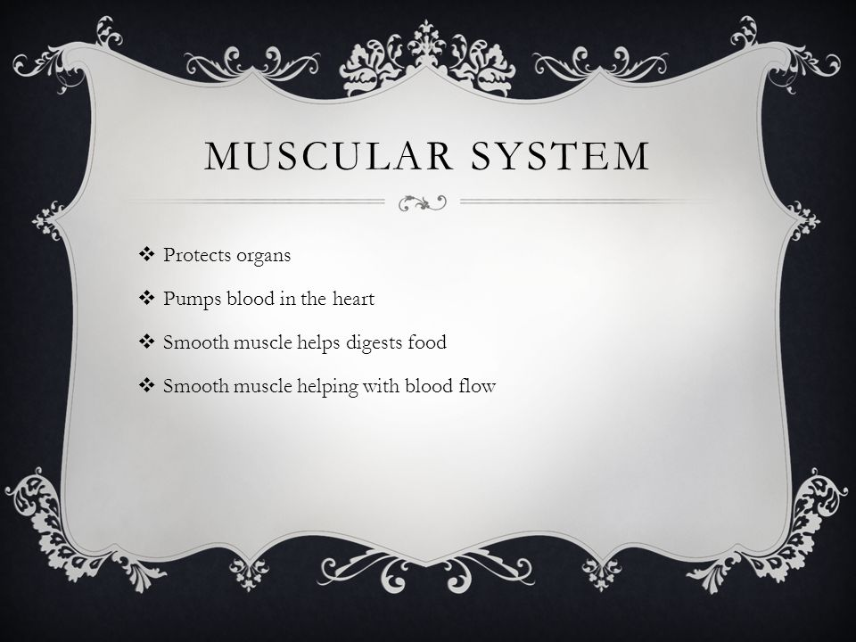 MUSCULAR SYSTEM  Protects organs  Pumps blood in the heart  Smooth muscle helps digests food  Smooth muscle helping with blood flow