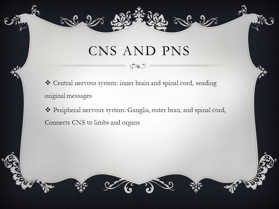 CNS AND PNS  Central nervous system: inner brain and spinal cord, sending original messages  Peripheral nervous system: Ganglia, outer bran, and spi