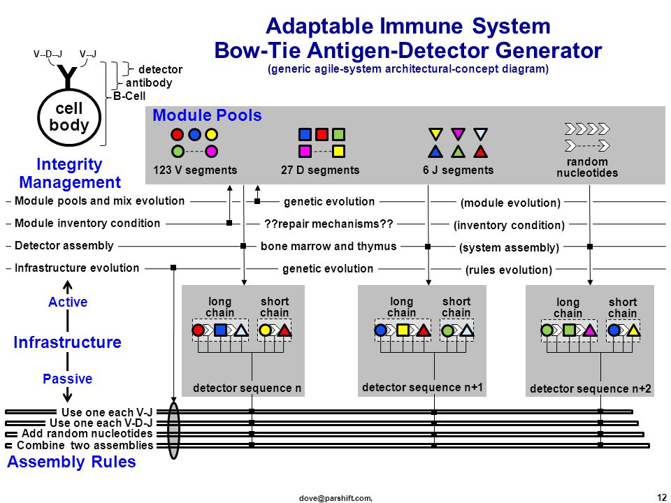 dove@parshift.com, 12 Adaptable Immune System Bow-Tie Antigen-Detector Generator (generic agile-system architectural-concept diagram) detector sequence n short chain long chain detector sequence n+1 short chain long chain detector sequence n+2 short chain long chain cell body Y detector antibody B-Cell V--D--J V--J 123 V segments 6 J segments27 D segments random nucleotides Infrastructure evolution Detector assembly Module pools and mix evolution Module inventory condition Combine two assemblies Add random nucleotides Use one each V-D-J Use one each V-J Infrastructure Assembly Rules Integrity Management Active Passive genetic evolution bone marrow and thymus genetic evolution repair mechanisms .
