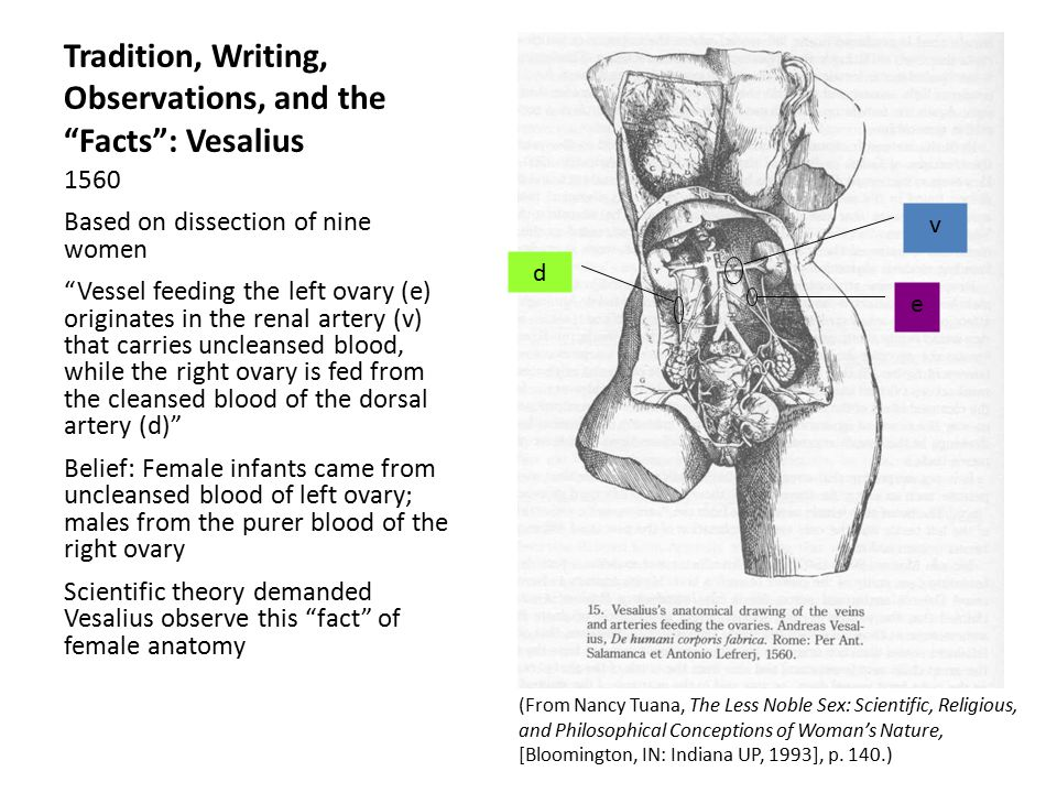 Tradition, Writing, Observations, and the Facts : Vesalius 1560 Based on dissection of nine women Vessel feeding the left ovary (e) originates in the renal artery (v) that carries uncleansed blood, while the right ovary is fed from the cleansed blood of the dorsal artery (d) Belief: Female infants came from uncleansed blood of left ovary; males from the purer blood of the right ovary Scientific theory demanded Vesalius observe this fact of female anatomy (From Nancy Tuana, The Less Noble Sex: Scientific, Religious, and Philosophical Conceptions of Woman's Nature, [Bloomington, IN: Indiana UP, 1993], p.